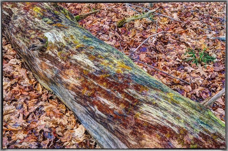 Colourful Log Macnamara Trail