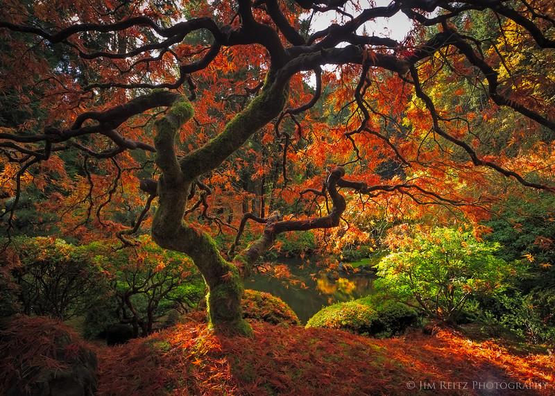 Bones of Autumn