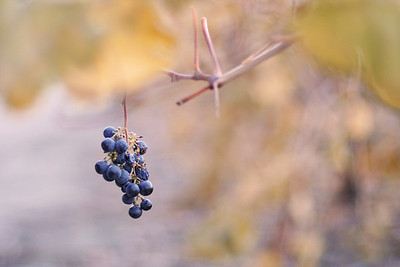 Vineyards & Wine Images
