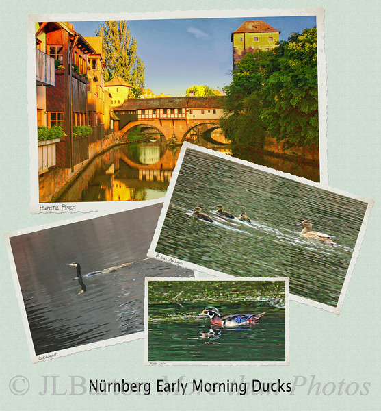 Waterfowl on the Pegnitz
