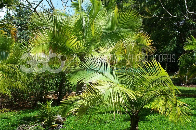 Palms-Horizontal_batch_batch.jpg