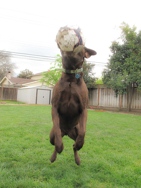Riley-soccer-ball-2.jpg