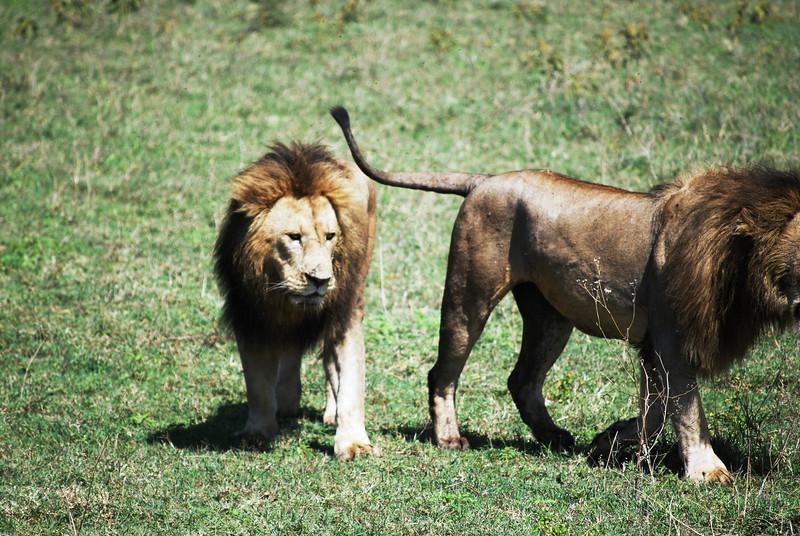 Ngorongoro (147).JPG