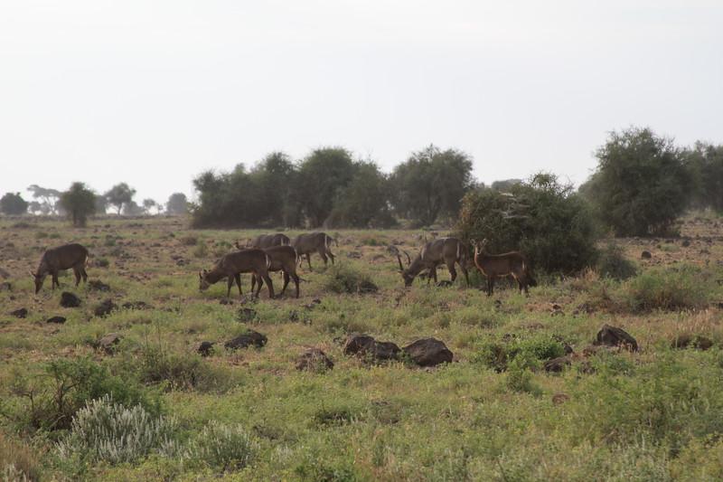 Kenya 2019 #2 241.JPG
