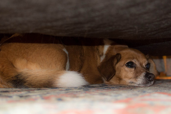 2014-05-23 Dogs under the bed