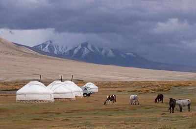 Mongolia Fox Trip 2019