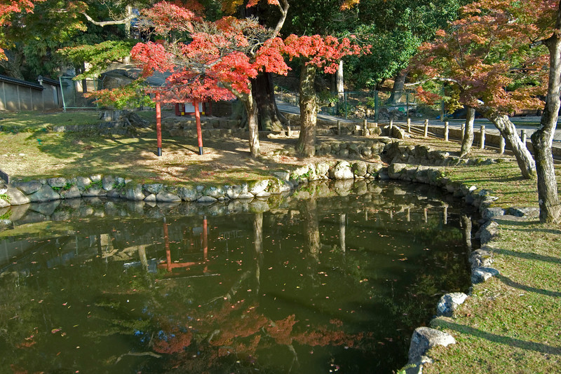 Small murky pond near Nigatsu-dō Hall in Nara, Japan