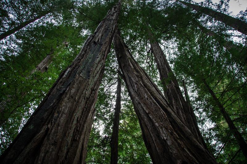 Redwood-54.jpg
