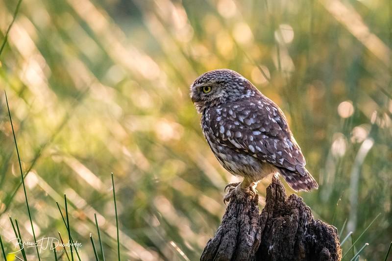 The Little Owl Shoot-6184.jpg