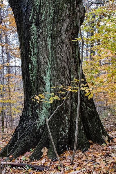 trunk 111718.jpg