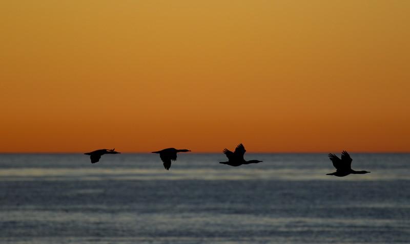 Cove La Jolla 2014 129.jpg