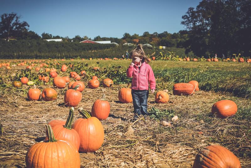 pumpkin picking 10-2016 _IMG_0839.jpg