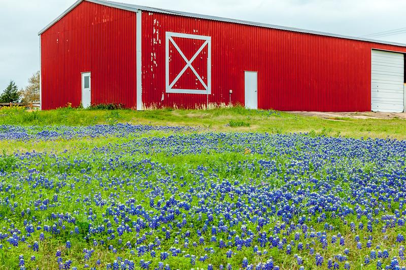 2015_4_3 Texas Wildflowers-7525-2.jpg