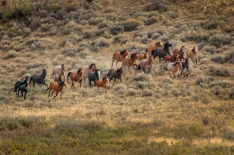 Wild Horses Running  #5