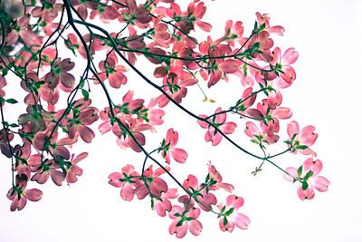 fleur : flore : flor