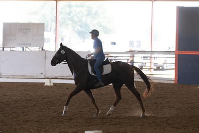 Horse 389