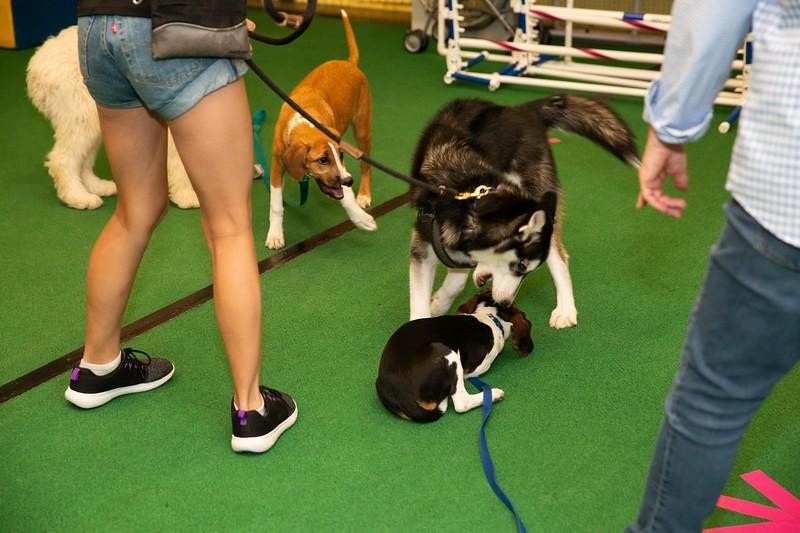 on Command dog Training June 2019-5168.jpg