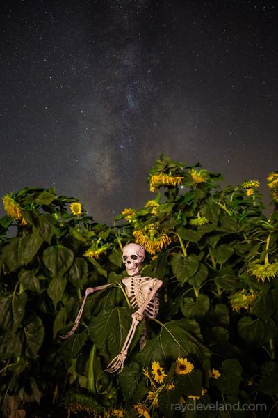 20191017-MaranaSunflowersMilkyWay-103.jpg