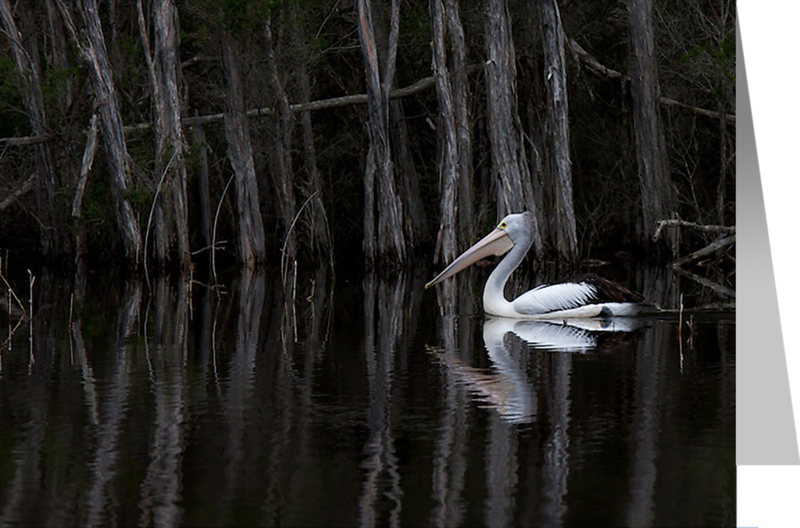 Pelican in Ti-tree.png