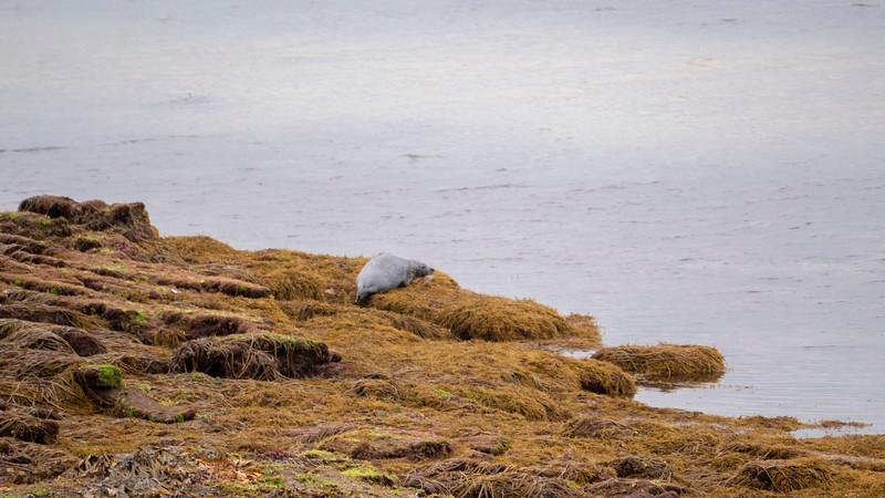 Ireland-Aran-Islands-Inishmore-15.jpg