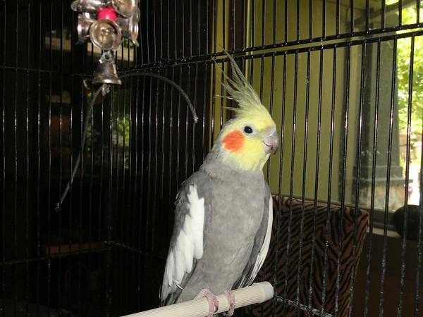 8th Past Parrots Rescues in our Sanctuary