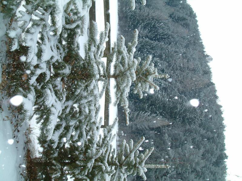 2005_02_01-22_59_18.jpg