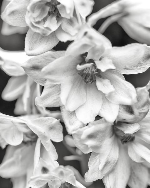 white-delphinium2.jpg