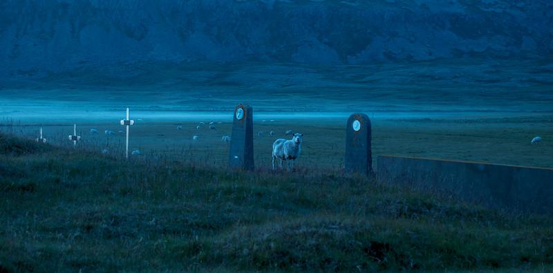 Spooky Lamb
