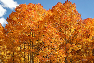 2019 Fall Foliage Colorado
