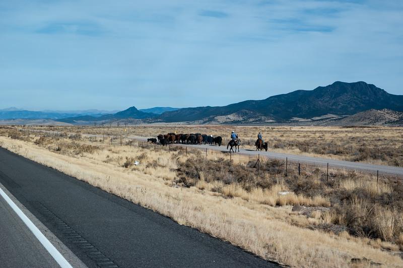Cowboys In Utah