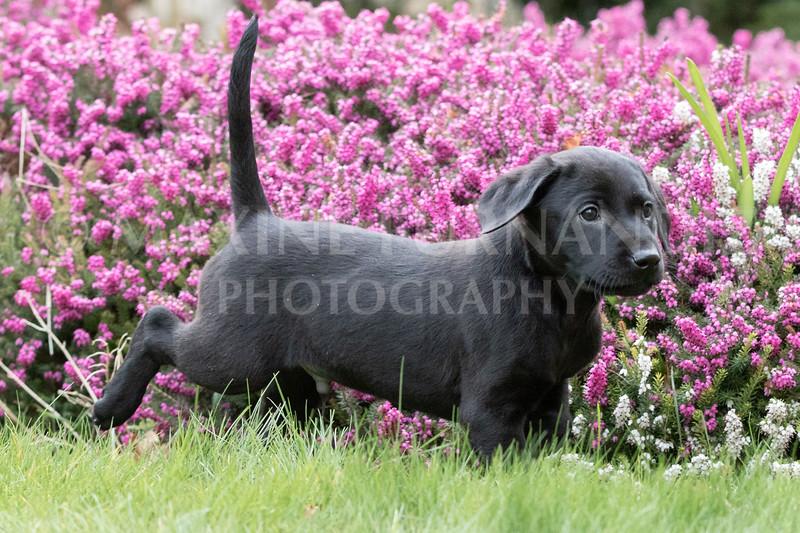 Weika Puppies 24 March 2019-6468.jpg