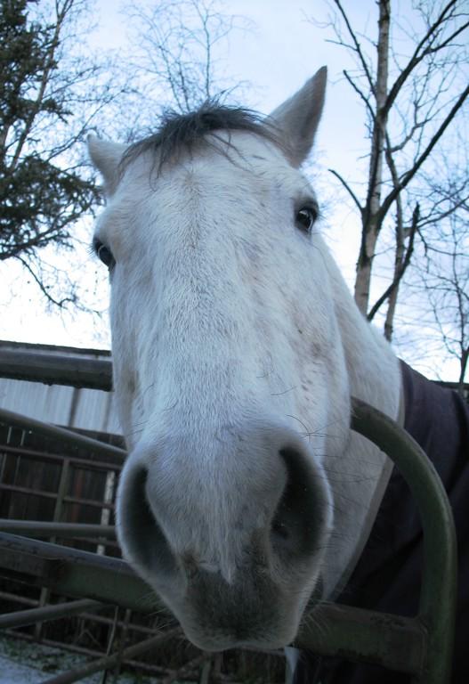 Pet Portrait Photography - Horse - Anchorage - Alaska - USA