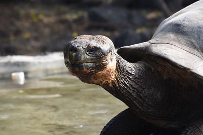 5-27 & 28 - 2-18 Galapagos Darwin Center & Tortoise Reserve