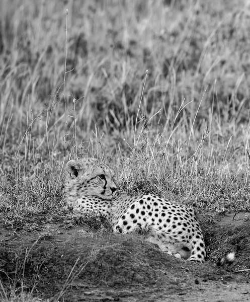 Tanzania_Feb_2018-1219.jpg