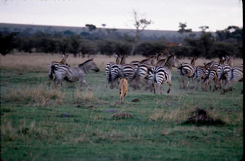 Kenya2_017.jpg
