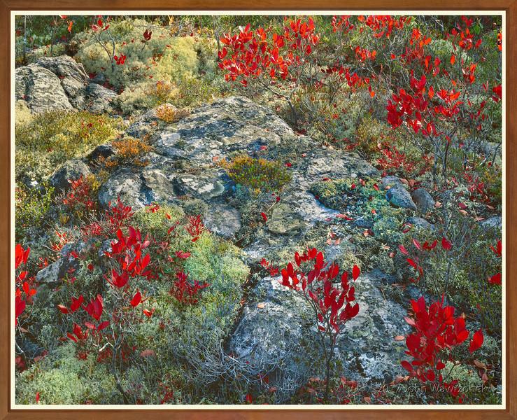 Lichens, Moss & High-bush Blueberry