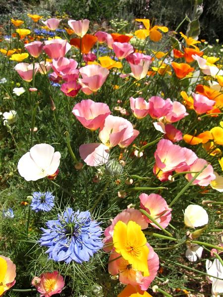 amh FLOWERS (1026).jpg
