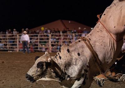 2011 Dalton Pro Rodeo