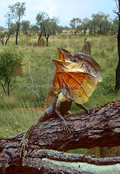 Australian Reptiles Snakes and Lizards