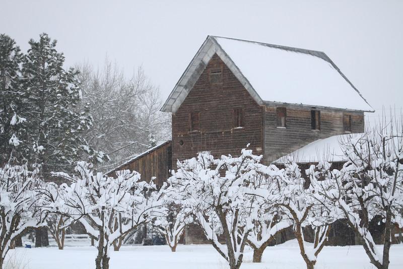 20100225_Snow Day_1244.JPG