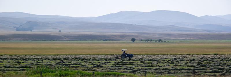 Raking Hay In Montana