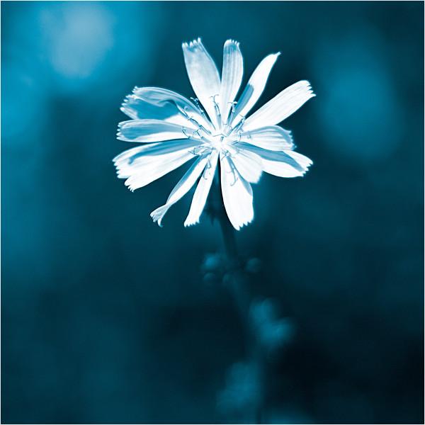 20110724_Flower3.jpg