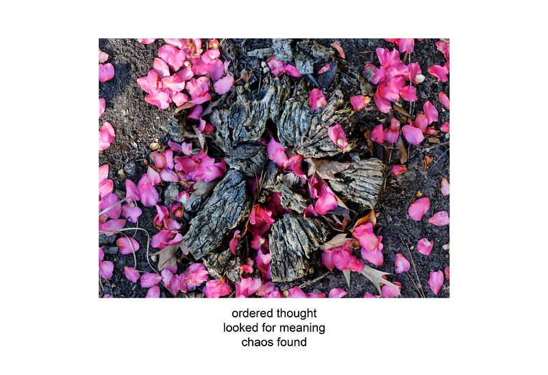 2011-01-08 stump and flowers poem.jpg