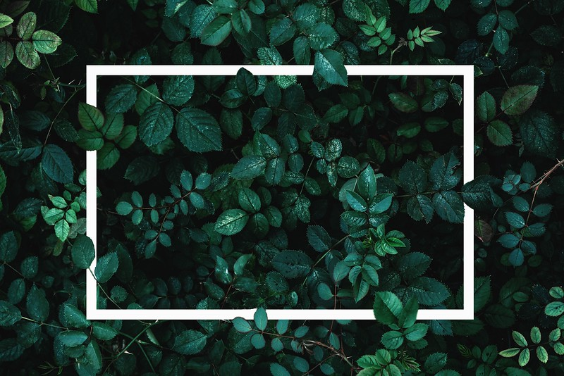 Green leaves or plants background with white frame for text as mockup for card