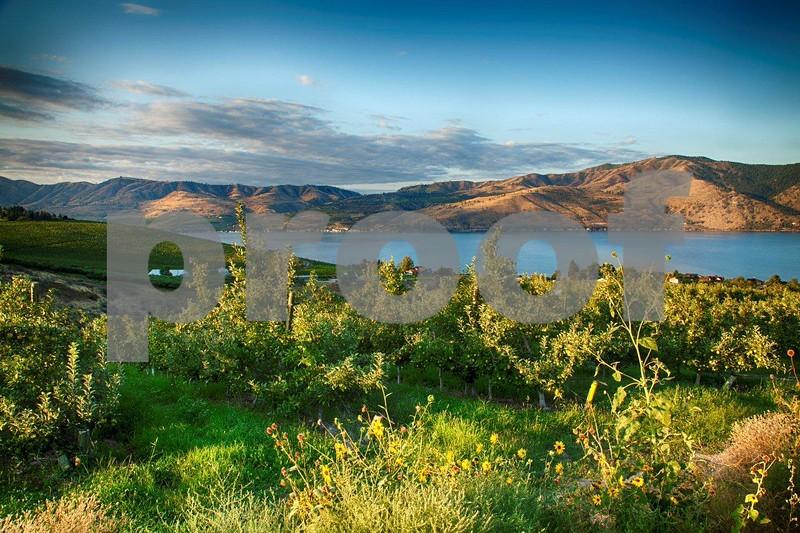 Lake Chelan sunrise 1099_HDR.jpg