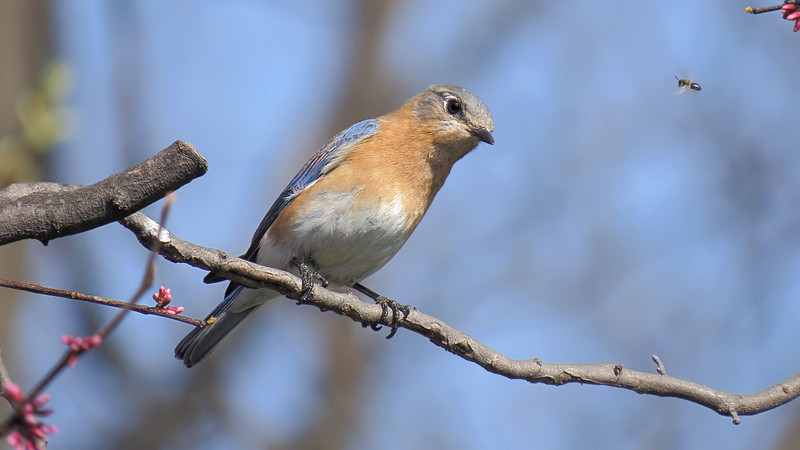 sx50_bluebird_faith_bit_cr2_dpp_005.jpg