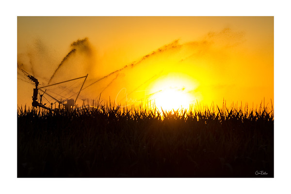 Idaho Cornfield Sunset