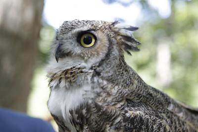 Quogue Wildlife Refuge & Pine Barren Aerials
