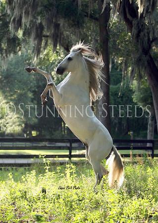 Cheris Horses