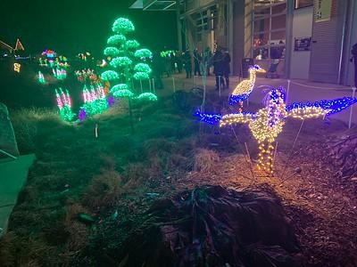 Bellevue Gardens Lights